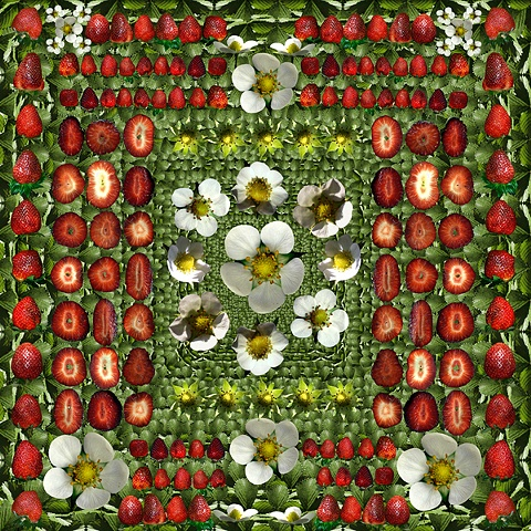 strawberry strawberries mandala healing medicine flowers blue white green leaves fruit slices