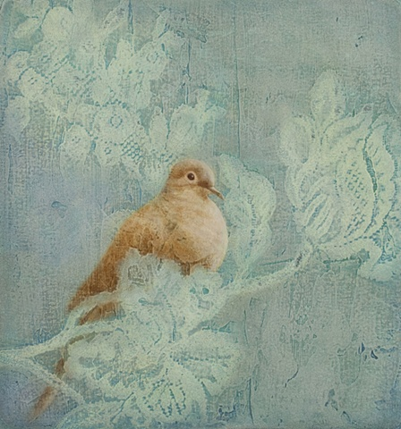 oil painting of mourning dove bird on blue lace by susan hall