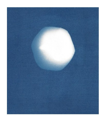 Cyanotype Archive: Toy Tomato