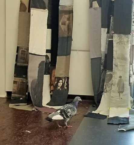 A tired and hungry homing pigeon who wandered into my studio and stayed for a week.