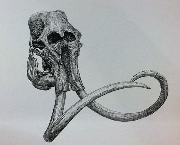 a pen and ink black and white drawing of a wooly mammoth skull elephant tusks crosshatching