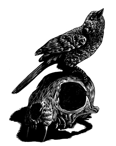 bird and cat skull relief engraving print printmaking providence hope raven crow