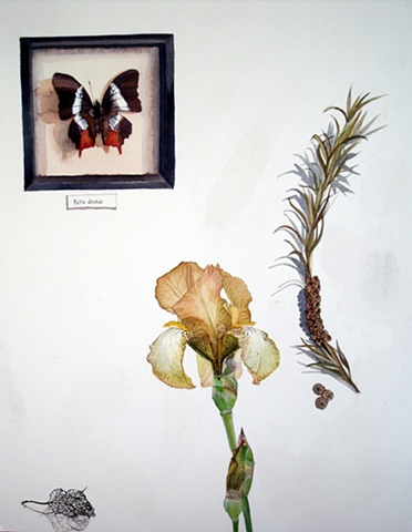 Lacy Lily Pad, Bearded Iris, Pinecone Kernals and pinned Butterfly