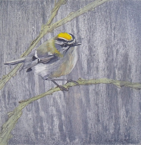 Goldcrest l  SOLD