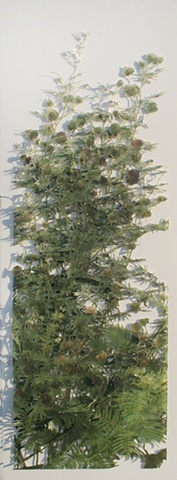 Nebraska Wildflower