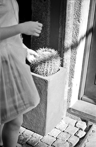 Cactus, Porto, Portugal, 2010