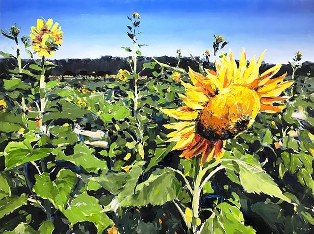 "'Sunflower Field. Raleigh NC'  36""x48"" Oil on wood"