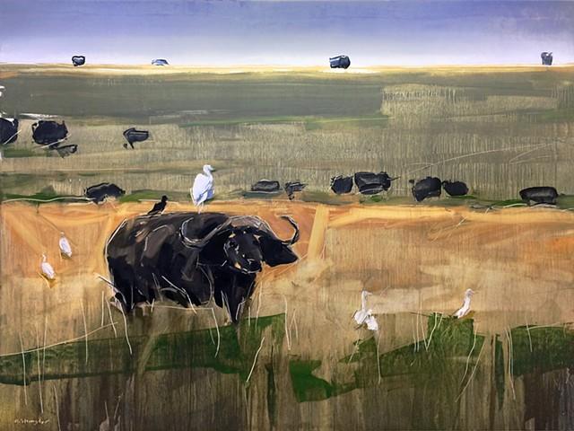 'Buffalo in Murchison Falls. Africa,
