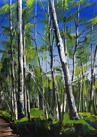 "'Spring Aspens. Telluride Colorado'  42""x30"""