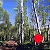"'Aspen Forest. Telluride Colorado' 48""x64"" Oil on wood"