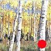 "'Fall Aspens. Colorado'  40""x60"" Oil on wood"