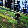 "'Grazing Grizzly. Yellowstone' 8""x10"" Oil on wood"
