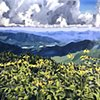 """'Blue Ridge Mountains. CO'  40""""x48"""" Oil on wood"""