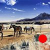 "'Grazing Horses. Montana' 11""x14"" Oil on wood"