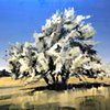 "'Montana Tree. Red Lodge, MT'  48""x64"" Oil on wood"