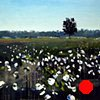 "North Carolina Cotton Field'  24""x28"" Oil on wood"