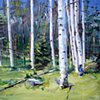 "'Tabernash Aspens, CO'  24""x30"" Oil on wood"