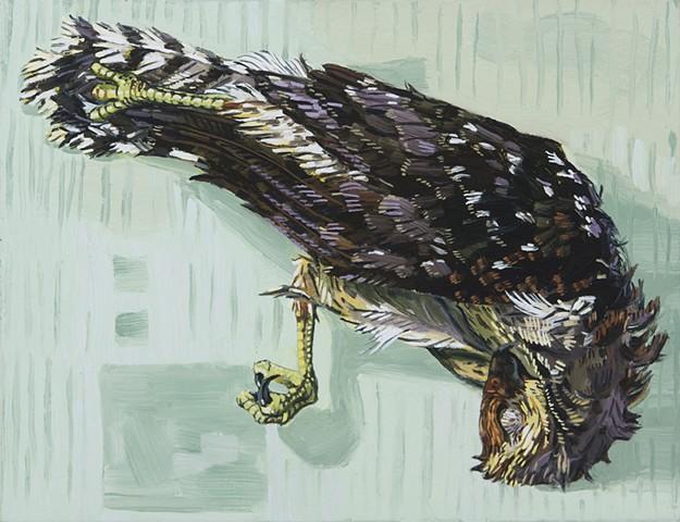 Hawk Still Life