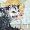 Saintly Opossum
