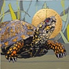 Roadkill Reverence Turtle