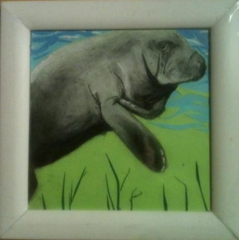 Manatee in shallow water
