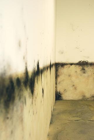 Jasmyne Graybill Floodline Acrylic paint, charcoal, pastel 9' x 7' Installation