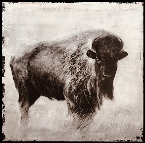 """Bison in Field"""