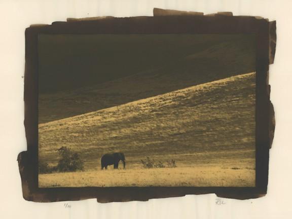 """Lone Elephant"" Edition 1/10"