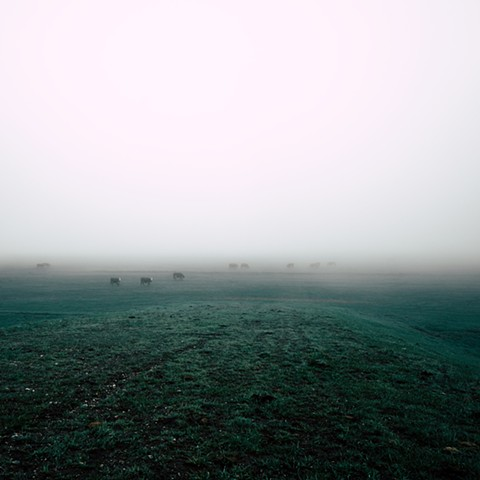 """Cows in the Fog"""