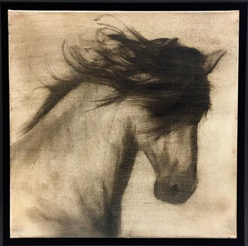 """""""Stallion"""""""
