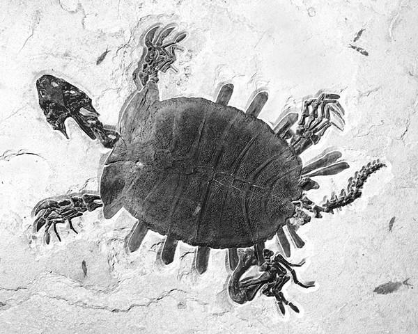 """""""Turtle II"""""""