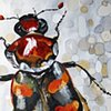 """""""American Burying Beetle"""""""