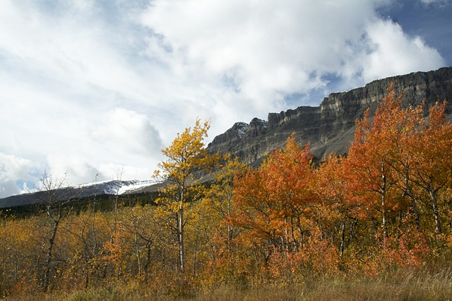 Fall leaves near the east entrance to Glacier National Park.