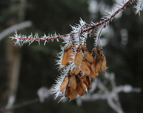 Morning fog freezes to form Hoar Frost crystals on an icy Montana morning.