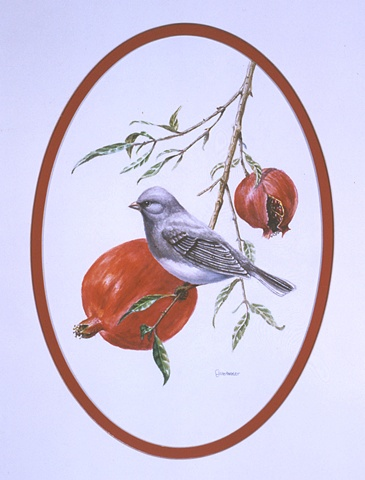 A Junco alights on a pomegranate branch