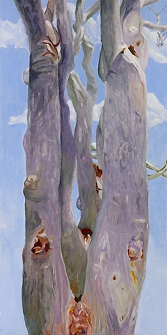 eucalyptus, east end