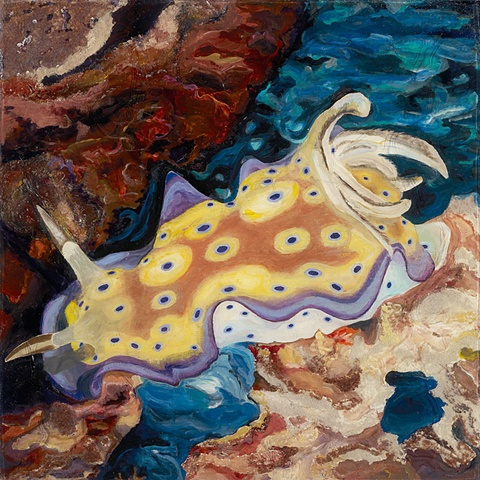 spotted nudi