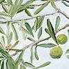 olive, provence