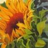 Flowering Sun