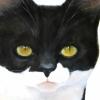 Suzie's Kitty