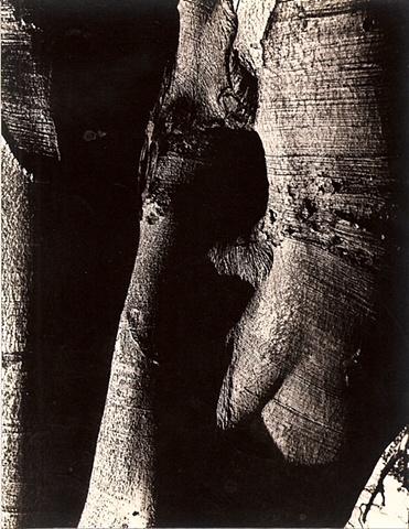 Untitled 1978.1