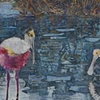 """Reflections, Spoonbills"""