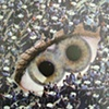 Ouvre l'oeil..... et le bon ! ///2008