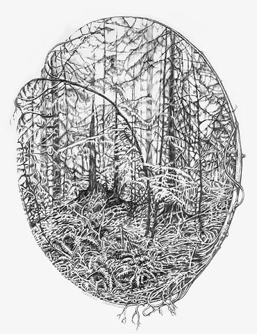 Forest Cameo VI