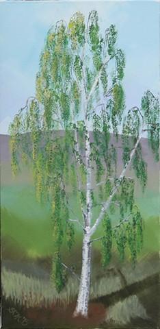 greeting cards, postcards, betula, silver birch