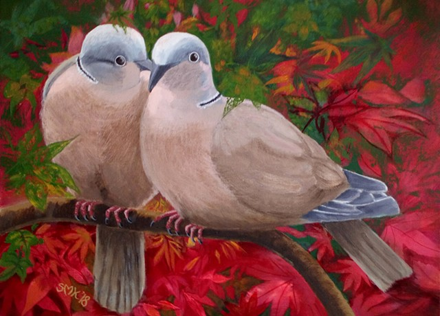 fine art, bird, birds, ring necked doves, greeting cards, oils, watercolours