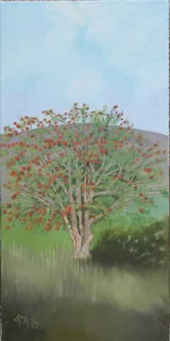 postcards, greeting cards, Scottish tree, sorbus aucuparia