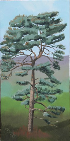 greeting cards, postcards, scots pine, pinus sylvestris