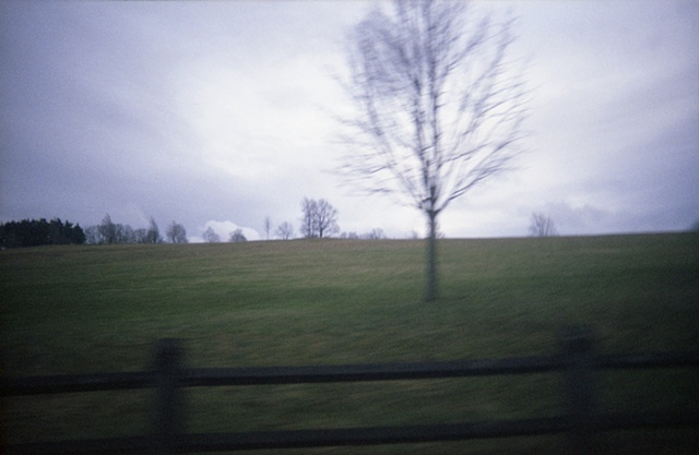 color photograph of tree in field by iris grimm