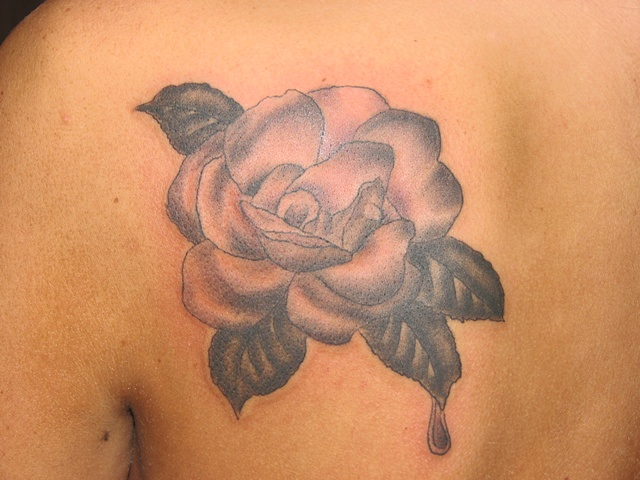 rose tattoo, rose, flower tattoo, black and grey tattoo, steve Anderson, tattoo, tattoo shop, tattoo studio, 920 tattoo company, Oshkosh
